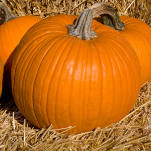decorating for fall at your home